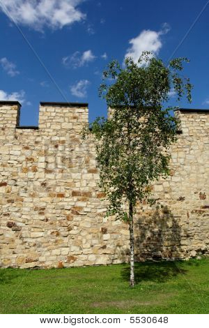 Wall With Tree