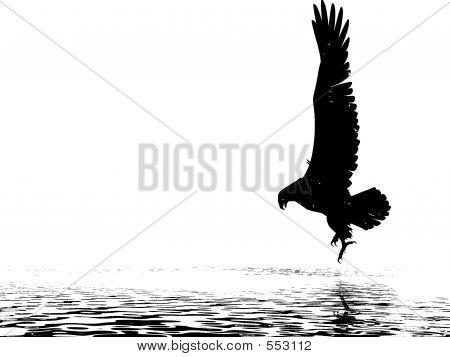 Monochrome Eagle