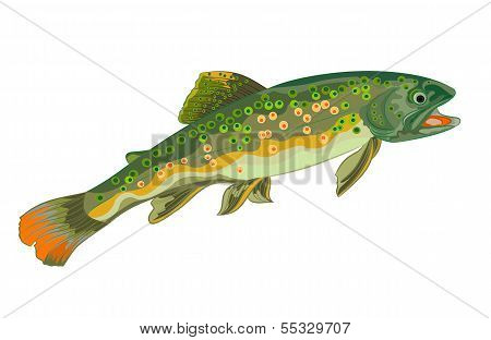 Brook Trout Fish.eps