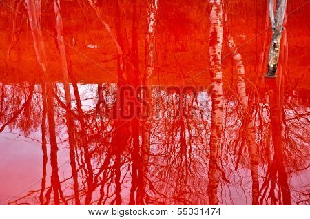 Reflection Of Dead Trees In A Contaminated Lake Water