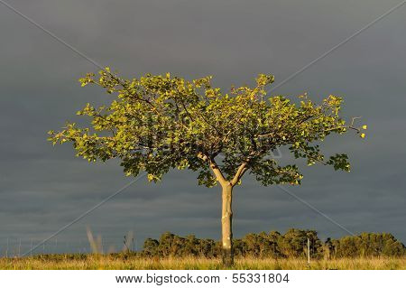 Tree In Late Afternoon