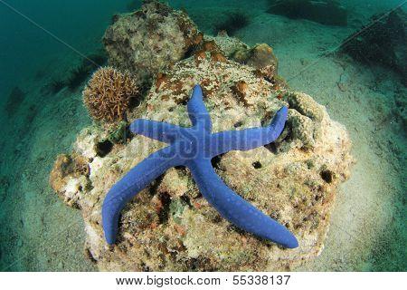 Blue Starfish underwater
