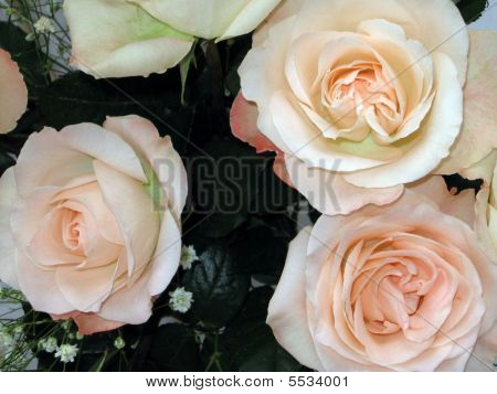 Bouquet Of Sweetheart Pink Roses