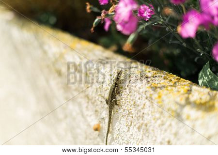 Lizard Climbing Up A Wall