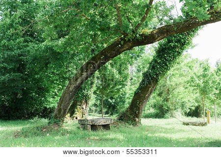 Bench In A Stunning Forest Underneath Some Trees