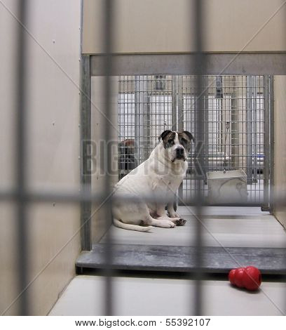 a dog in a local shelter - shot at high iso
