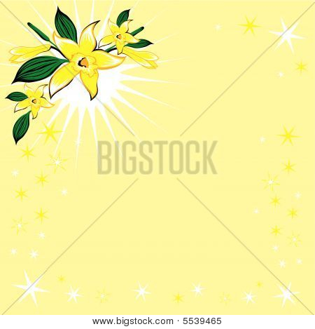 Background With Stars And Vanilla Flower