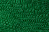 pic of green snake  - dark green snake skin texture to background - JPG