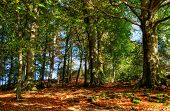 Autumn woodland scene