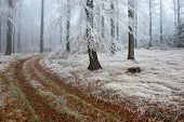 picture of icy road  - View on a forest road with fog in background - JPG