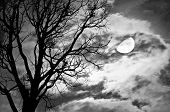 image of freaky  - Silhouette of dead Tree against moon and clouds in a cloudy night  - JPG