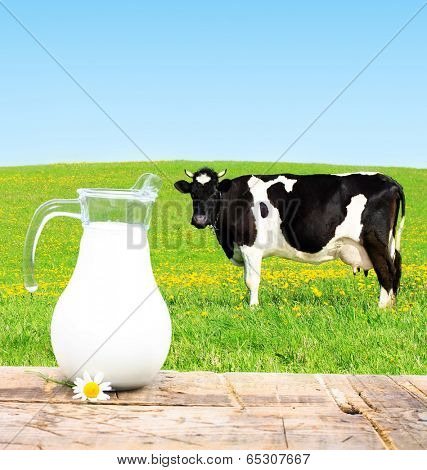 Milk jar and cow grazing on a green meadow.