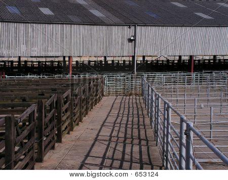 Cattle Market Pens
