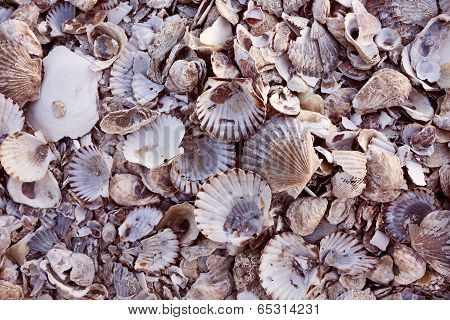 Pile of colorful shells