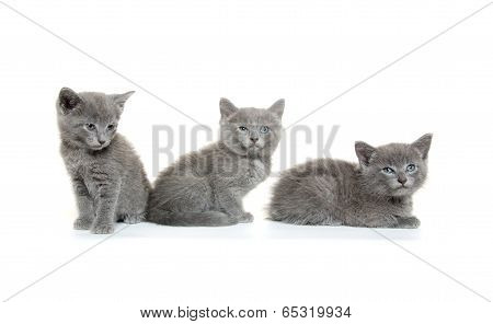 Three Gray Kittens