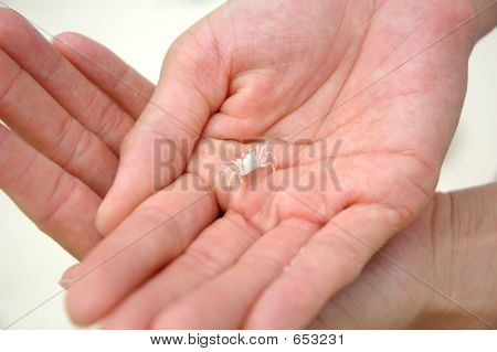 Tiny Crab In Hands