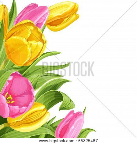 Background of pink and yellow tulips on white background