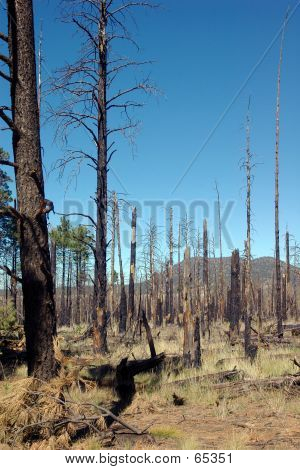 Forest Fire Recovery