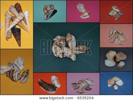 Shell Collage