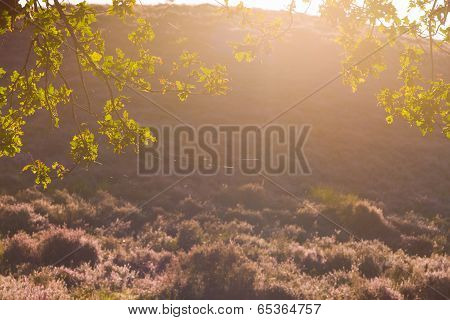 Autumnal Backlight
