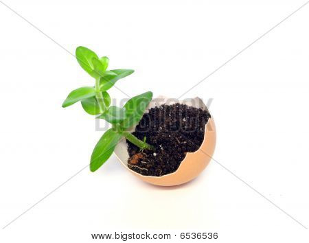 Plant In The Egg