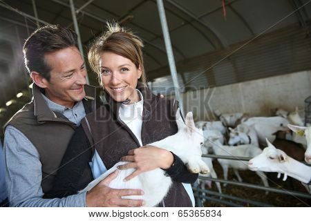 Couple of breeders in barn carrying baby goat