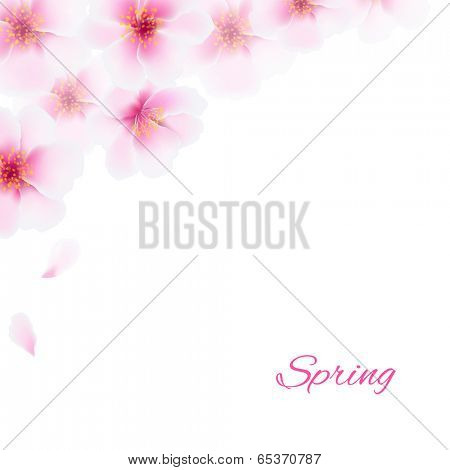 Pink Cherry Flowers Border, With Gradient Mesh, Vector Illustration