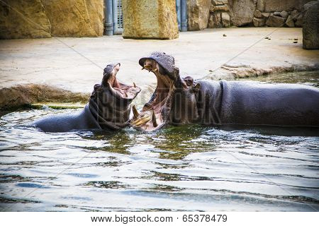 Playing hippos.