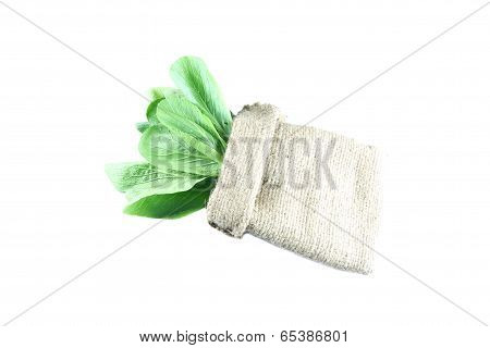 Fresh Bok Choy In Sack Of Isolated On White.