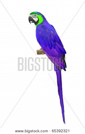 Purple Macaw Aviary
