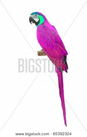 Pink Macaw Aviary