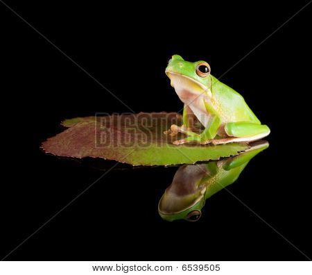 Reflected Tree Frog On Leaf