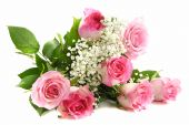 foto of pink roses  - Beautiful pink roses bouquet isolated on white - JPG