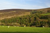picture of hollow  - Hollow Combe on the Dunkery Hill Exmoor - JPG