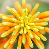 image of rare flowers  - Orange Green Atom Flower Plant Nature Macro - JPG