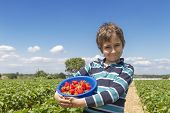 stock photo of strawberry blonde  - Boy with a bowl of strawberries on a strawberry field - JPG