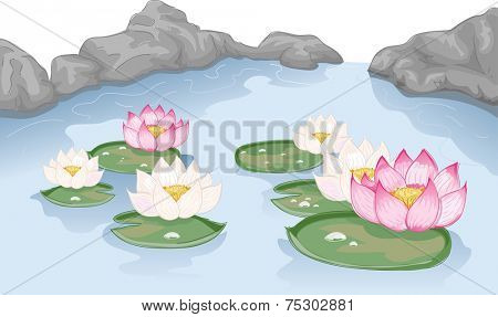 Illustration Featuring Lotus Flowers Floating on Water