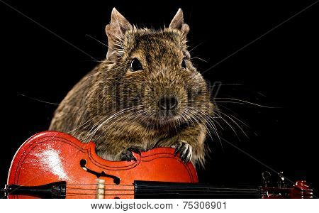 Degu Mouse Musician