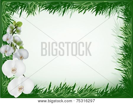 illustration with white orchid flowers and green bamboo frame