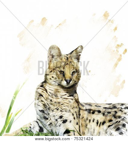 Digital Painting Of Serval Portrait