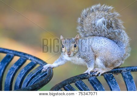Squirrel poses on trash bin