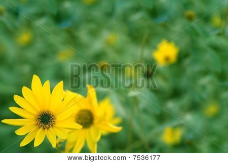 Background With Flowers Of Yellow Color
