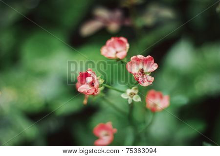 small red roses blooming