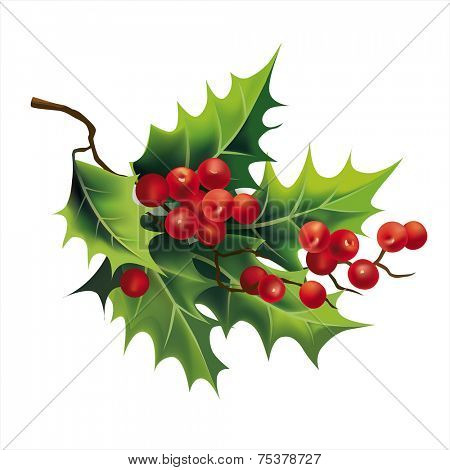 Christmas holly on white. Vector eps 10.
