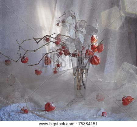Still-life with Physalis alkekengi