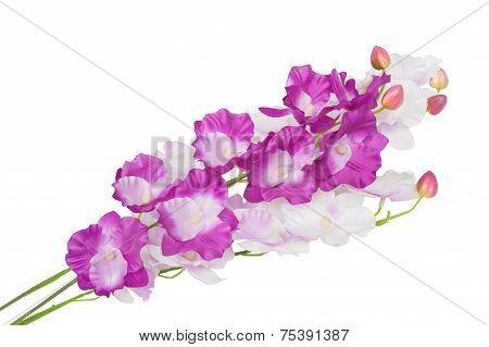 Beautiful Gladiolus Flower Isolated On White Background