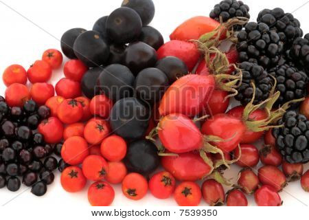 Wild Autumn Fruit