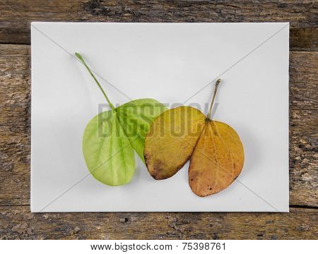 Fall and spring leaves