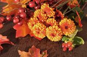 pic of chrysanthemum  - Fall or autumn Chrysanthemum flowers and berries with orange leaves on a vintage wooden background - JPG