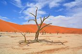 picture of dead-line  - Deadvlei is a white clay pan located near the more famous salt pan of Sossusvlei - JPG